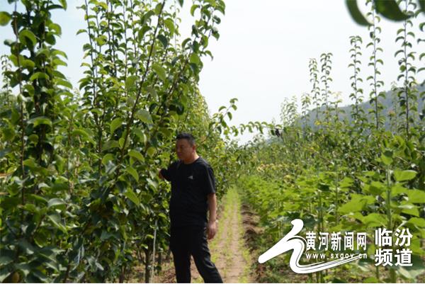 大宁县房宏伟:两大新型特色产业奏响绿色富民曲